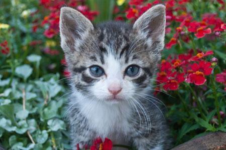 Purina CatChow.com Website